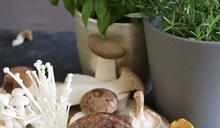 抗癌神器!吃對菇類能有強大健康好處