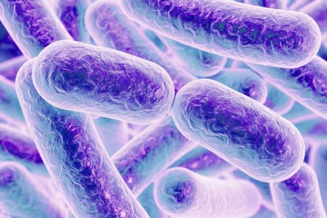 Bacteria Clostridium difficile. Los trasplantes fecales han demostrado hasta un 90% de curación en diarreas e inflamaciones causadas por esta bacteria | imagen Wikipedia