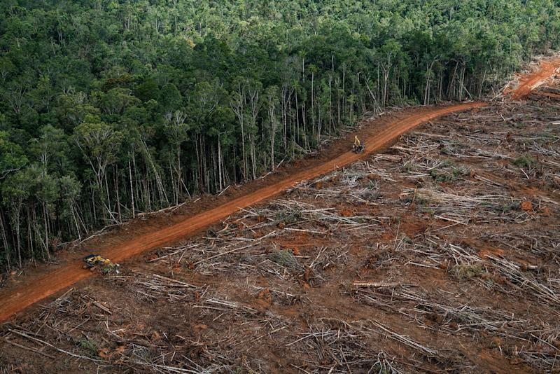 A forest clearance and plantation development for palm oil in PT Megakarya Jaya Raya in Papua (Picture: PA)