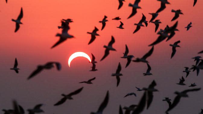 Burung camar terbang di pantai saat gerhana matahari parsial di Kuwait City, Kuwait, Kamis (26/12/2019). Gerhana matahari yang terjadi pada hari ini dapat diamati dari sejumlah wilayah mulai Afrika timur, seluruh Asia, Samudera India, dan Australia utara. (YASSER AL-ZAYYAT/AFP)