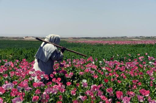 Afghanistan accounts for the overwhelming majority of the world's opium production with an output of 9,000 tons -- a rise of 87 percent compared to 2016
