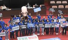 立法院開議蘇貞昌報告 國民黨立委抬小豬抗議