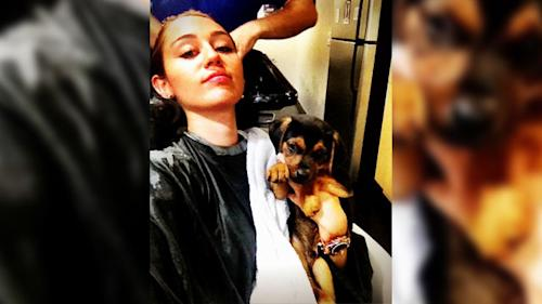 Miley Cyrus Rescues Puppy
