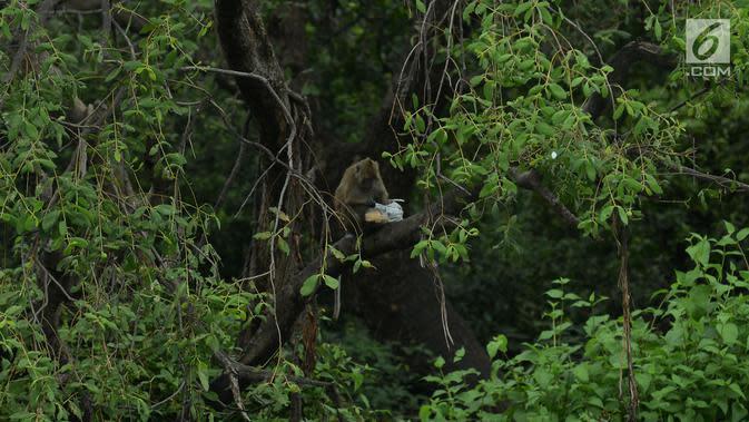 Monyet ekor panjang menikmati makanan di kantong plastik di hutan Taman Marga Satwa Muara Angke, Jakarta,Sabtu (19/1). Kawasan lahan basah yang masih tersisa dengan potensi alam yang cukup tinggi adalah Kawasan Hutan Angke Kapuk. (Merdeka.com/Imam Buhori)