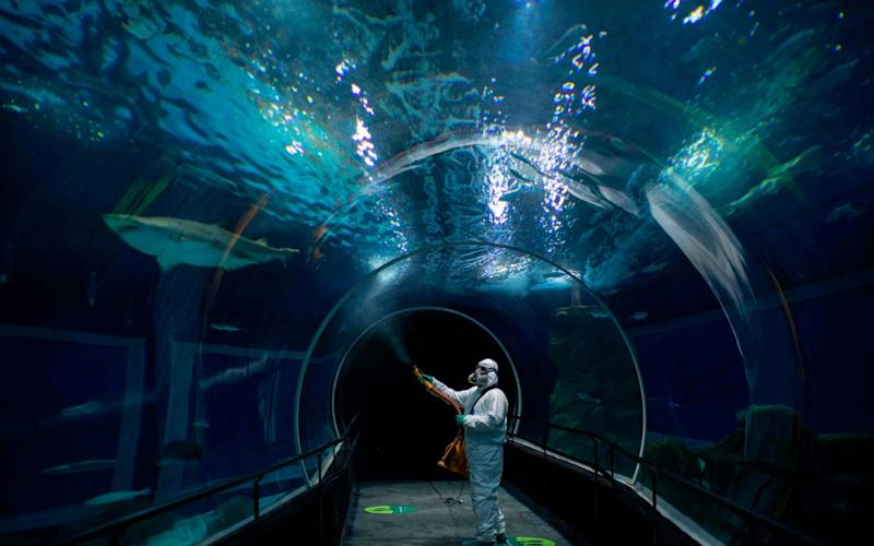 A worker disinfects the oceanic tunnel of the Rio de Janeiro Aquarium on the eve of the reopening of the touristic attraction - MAURO PIMENTEL/AFP