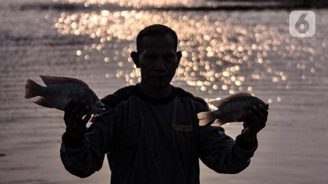 Warga menunjukkan bangkai ikan Mujair di Situ Rawa Besar, Lio, Depok, Jawa Barat, Kamis (20/8/2020). Sejak dua hari terakhir ribuan ekor ikan Mujair mati dan memenuhi Situ Rawa Besar yang menurut warga setempat disebabkan oleh faktor cuaca. (merdeka.com/Iqbal S. Nugroho)