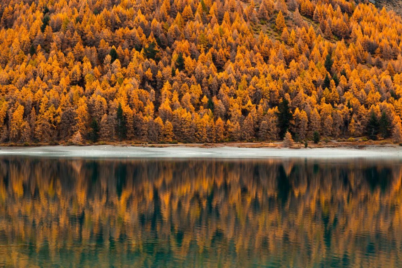 <p>Autumn trees line Lake Tekapo in South Island, New Zealand.</p>