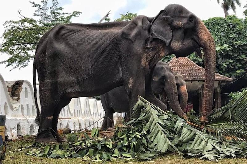 Emaciated Tikiiri (Save the Elephant Foundation)