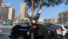 裝置藝術?另類樹葡萄? 「安全帽樹」現街頭