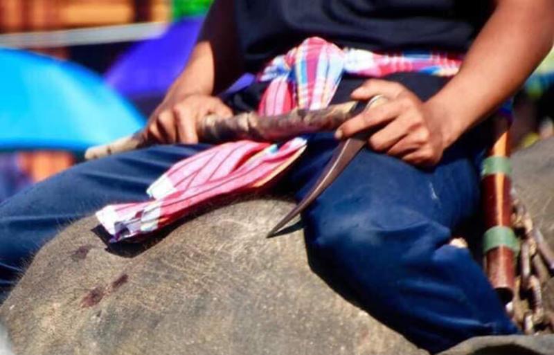 A Thai elephant handler is seen holding a sharp metal hook. Source: abang da balik / Twitter
