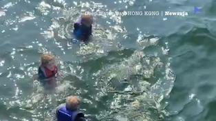 深水灣又見海豚