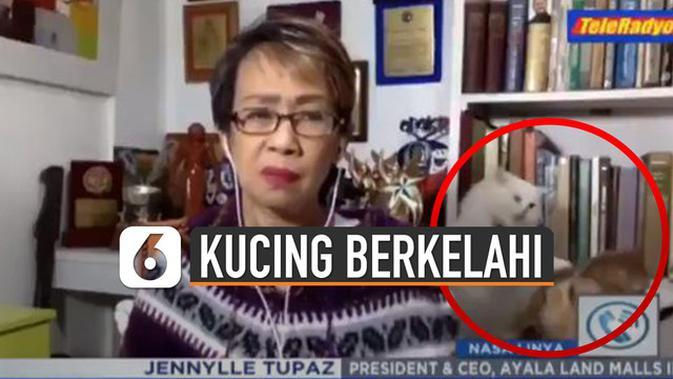 VIDEO: Viral Kucing Berkelahi Saat Live TV