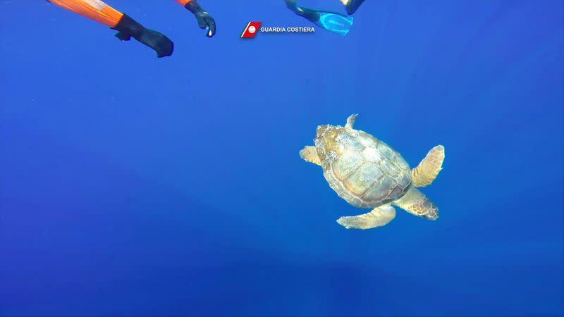 Mediterranean marine life flourished during lockdown - Italian coastguard