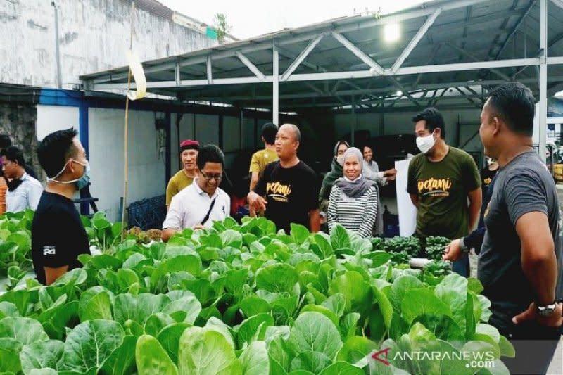 Hidroponik makin diminati masyarakat, peluang usaha yang menjanjikan