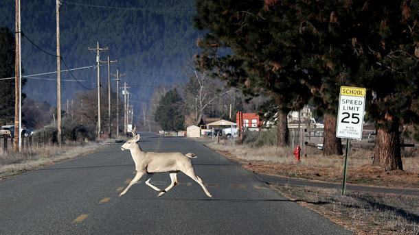 Deer vs. car crashes on the rise as wildlife hits the road