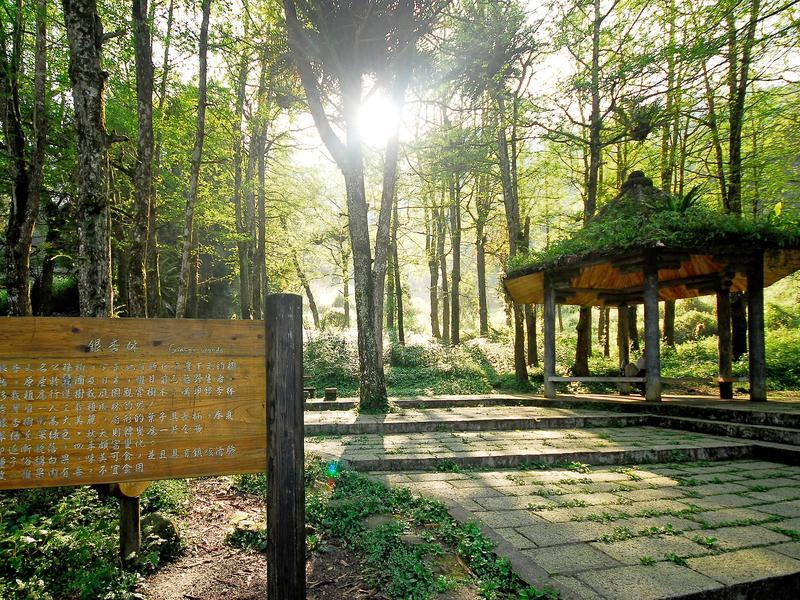 溪頭自然園區