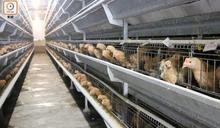 德國下薩克森州爆高致病性H5N1禽流感 港停進口禽類產品