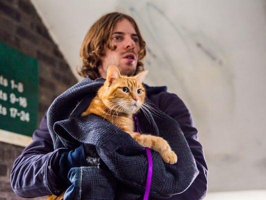 《遇見街貓BOB》