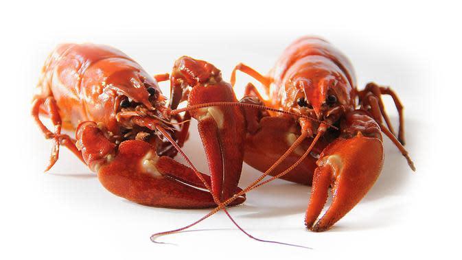Ilustrasi Lobster (Sumber Foto: Pexels)