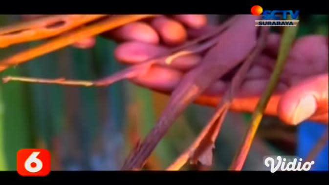 VIDEO: Dinas Pariwisata Usul Hutan Pelangi Bondowoso Jadi Global Geopark ke Unesco