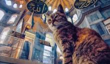 土耳其最紅景點貓貓去世 全球Fans悼念