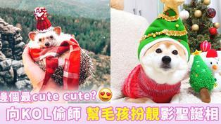 【學IG明星寵物】聖誕齊賣萌  幫可愛毛孩扮靚靚影相小秘技