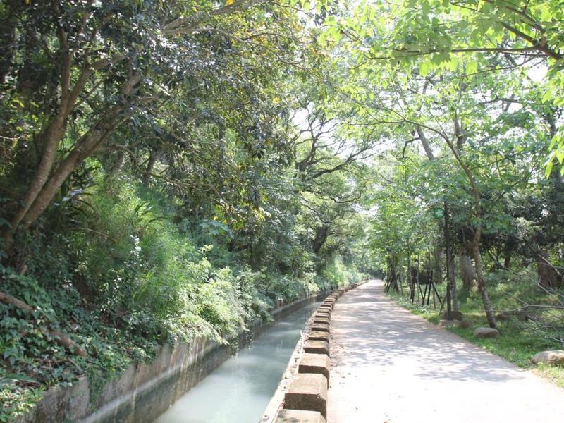 外埔水流東桐花步道