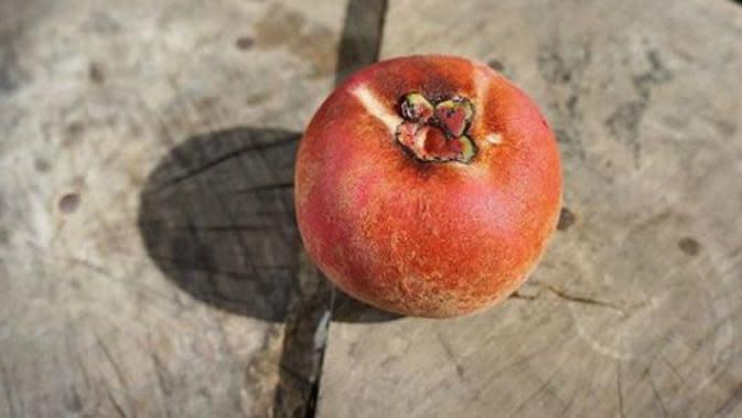 Ilustrasi buah mentega (Foto: instagram@dkppsurabaya)