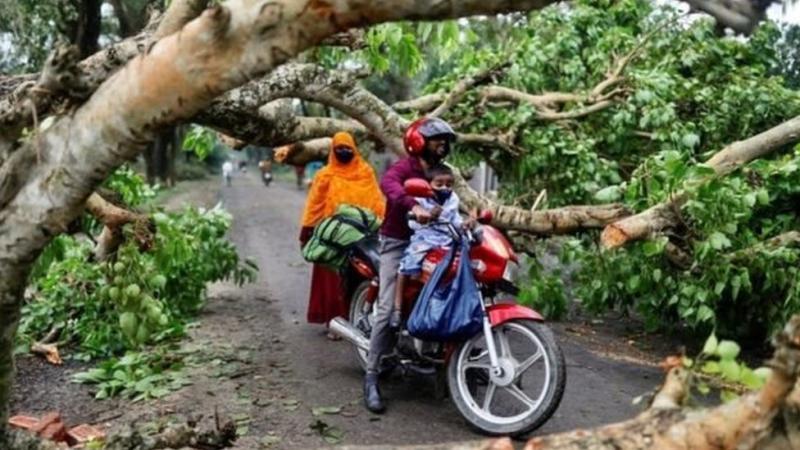 Jalan-jalan tertutup pohon tumbang di Bangladesh.