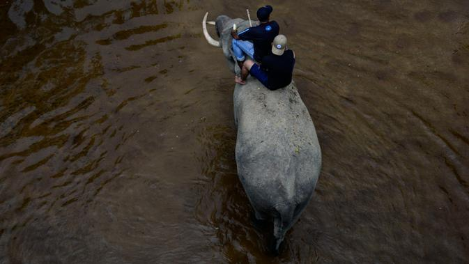 Pawang menaiki gajah sebelum memandikannya di sungai kawasan Conservation Response Unit (CRU) Desa Naca, Trumon Tengah, Aceh Selatan, Jumat (19/6/2020). BKSDA Aceh memiliki 32 ekor gajah jinak di Pusat Latihan Gajah (PLG) dan CRU untuk menangani konflik satwa. (CHAIDEER MAHYUDDIN/AFP)