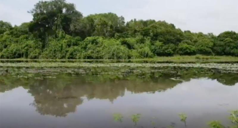 Darwin fisherman's catch stolen by 4m saltwater crocodile
