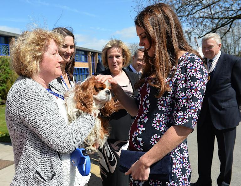 The Duchess of Cambridge strokes a dog as she arrives at The Willows Primary School, Wythenshawe, Manchester to launch a school counseling programme, Tuesday April 23, 2013. (AP Photo/Paul Ellis, Pool)