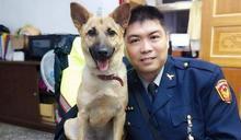 新北第63隻機關犬「平安」喜迎身分證