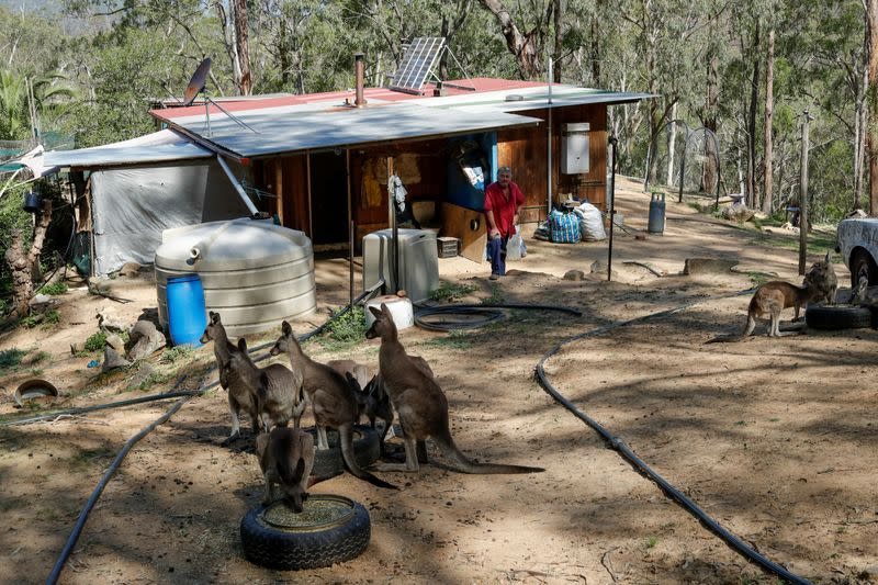 The Wider Image: At home with couple who saved baby kangaroos from the fires