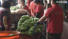 香蕉盛產價格崩跌 農委會啟動收購