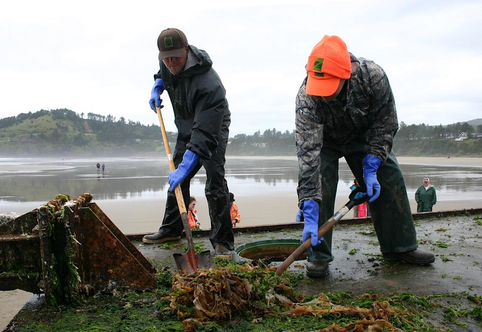 In this Thursday, June 7, 2012 photo proivded by the Oregon Park and Recreations Department, unidentified workers shovel debris from the top of a dock float torn loose from a Japanese fishing port by the 2011 tsunami that washed up Tuesday on Agate Beach near Newport, Ore. Workers with shovels, rakes and other tools first scraped the structure clean, then briefly used low-pressure torches to sterilize the dock. (AP Photo/Oregon Parks and Recreation Department)