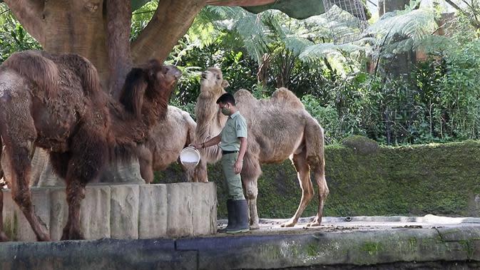 Salah satu satwa di Taman Safari. (dok Taman Safari)