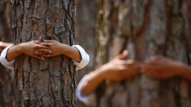 Sedang Jomblo? Anda Bisa Ikuti Lomba Memeluk Pohon