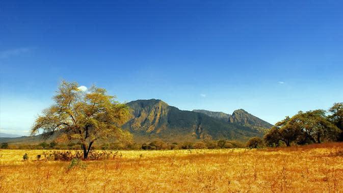 Taman Nasional Baluran, Banyuwangi, Jawa Timur. (Sumber Foto: balurannationalpark.web.id)