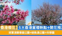 【香港櫻花】5大香港賞櫻熱點+開花預測 將軍澳單車館公園+鰂魚涌公園+科學園
