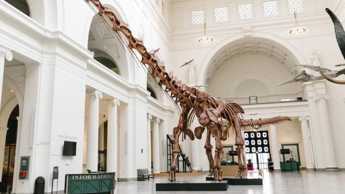 Máximo adalah titanosaurus yang disebut Patagotitan mayorum, dinosaurus terbesar yang pernah ditemukan. (Kredit: The Field Museum)