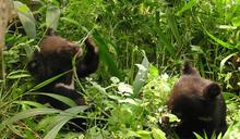保育學者與獸醫攜手合作,保護臺灣淨土「有熊國」!