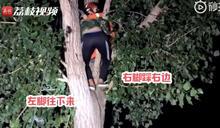 尷尬!男為救貓爬上樹反受困 12名消防員出動救援