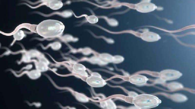 Ilmuwan Baru Tahu Cara Sperma Berenang Sampai ke Sel Telur