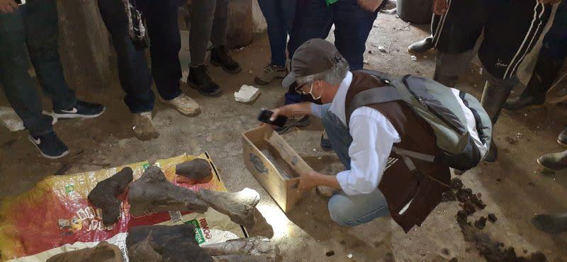 Colombian miners strike fossilized gold: a mastodon