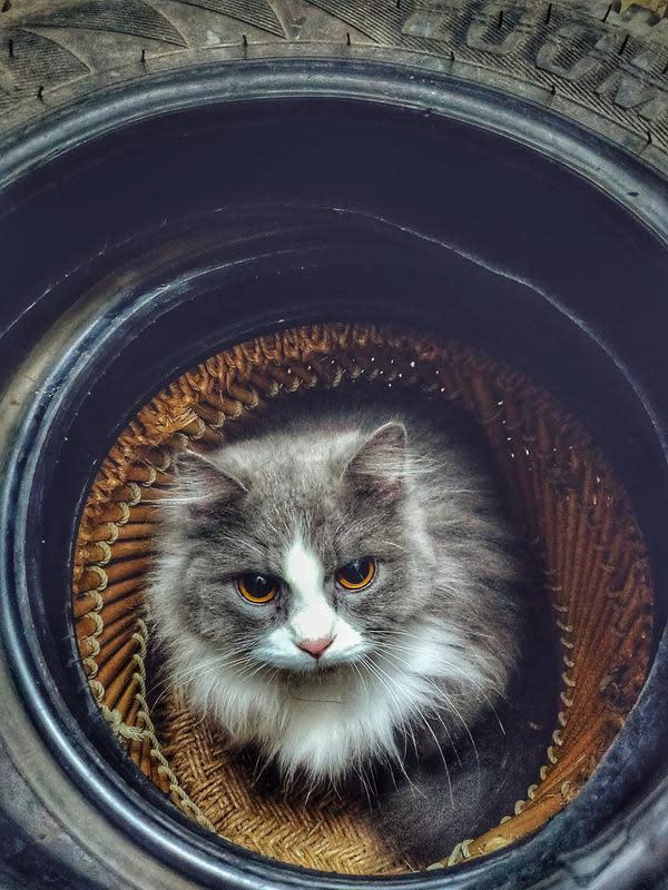 Ilustrasi kucing | Anas Jawed dari Pexels