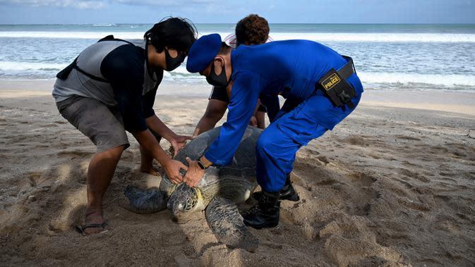 Anggota Ditpolairud Polda Bali (kanan) melepasliarkan penyu hijau (Chelonia mydas) di Pantai Kuta, dekat Denpasar, Rabu (5/8/2020). Sebanyak 25 dari 36 ekor penyu hijau hasil sitaan dari upaya penyelundupan di perairan Serangan, Denpasar, dilepasliarkan. (SONNY TUMBELAKA/AFP)