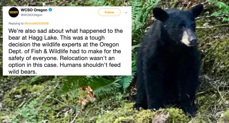The bear was a regular visitor to the area often eating food left behind for it. Source Twitter WCSO OregonMore