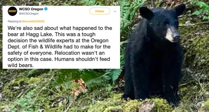 Wildlife Officials Kill Bear That Became Social Media Star