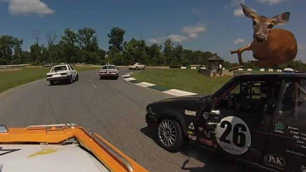 Deer fails at hurdling race car on track